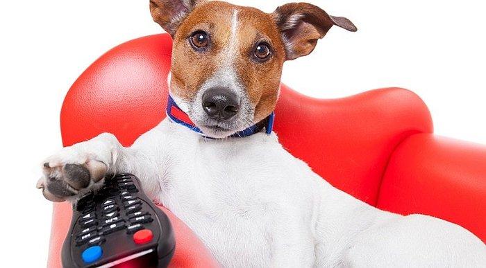 Mando a distancia para perros, ellos también ven la tele