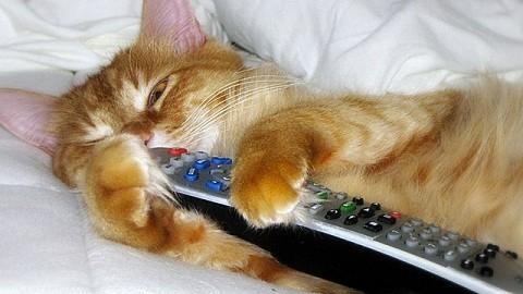gato con mando a distancia